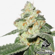 Foto Auto Great White Shark Feminised