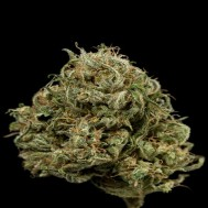 Foto Auto Exodus Cheese CBD Feminised