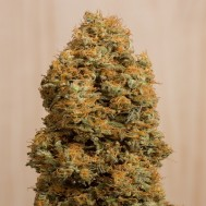 Foto Green Crack CBD