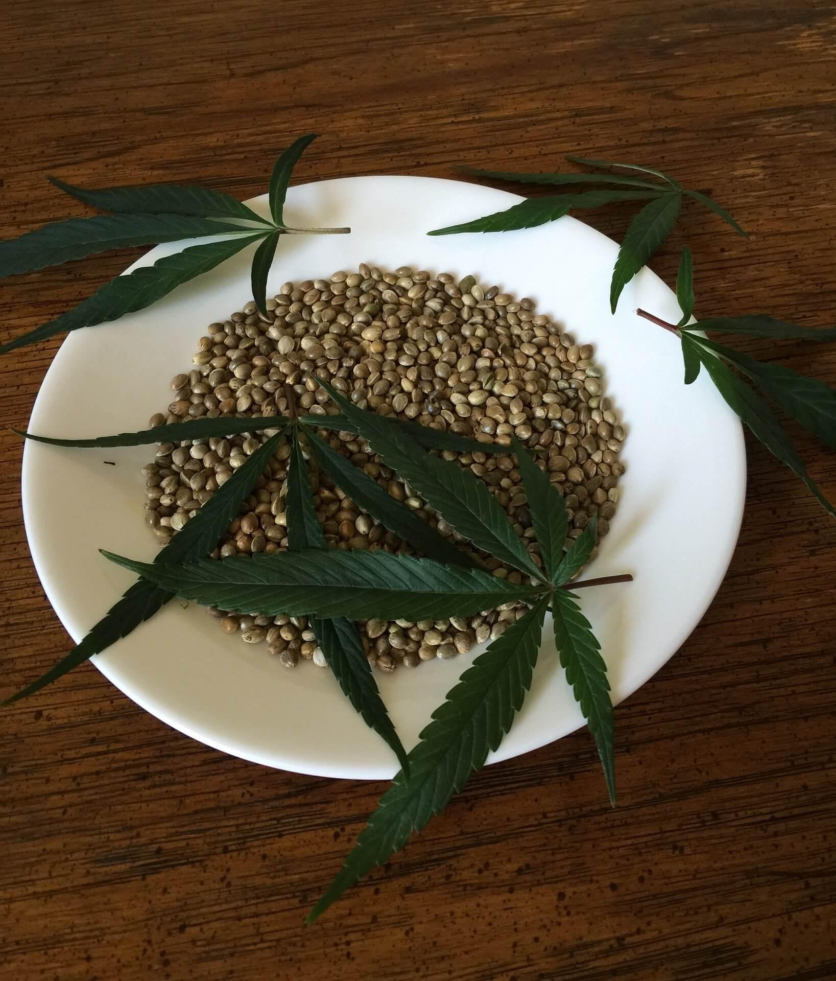 Как выбрать семена конопли?